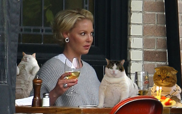 katherine-heigl-cats